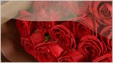 美しく狂える赤薔薇サムライ