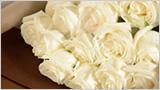 凛として白薔薇アバランチェ
