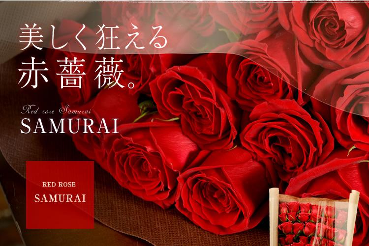 美しく狂える赤薔薇 レッドローズ サムライ