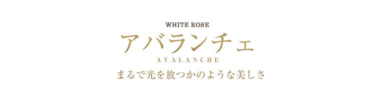 ホワイトローズ アバランチェ