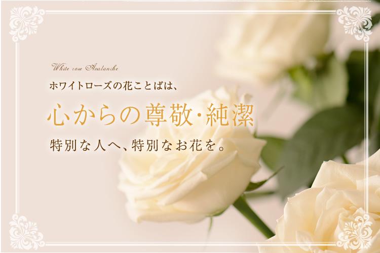 ホワイトローズの花ことばは「心からの尊敬・純潔」